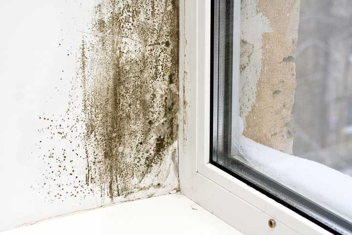 Mold removal Chagrin Falls