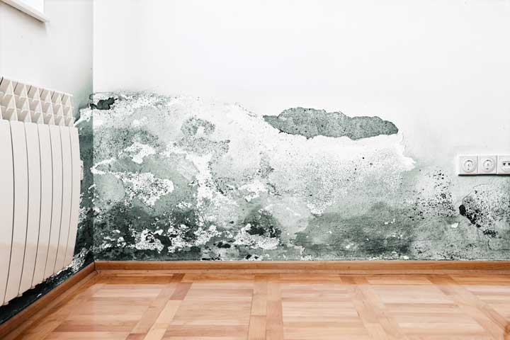Mold remediation estimates